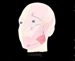 三叉神経痛・顔面神経麻痺について